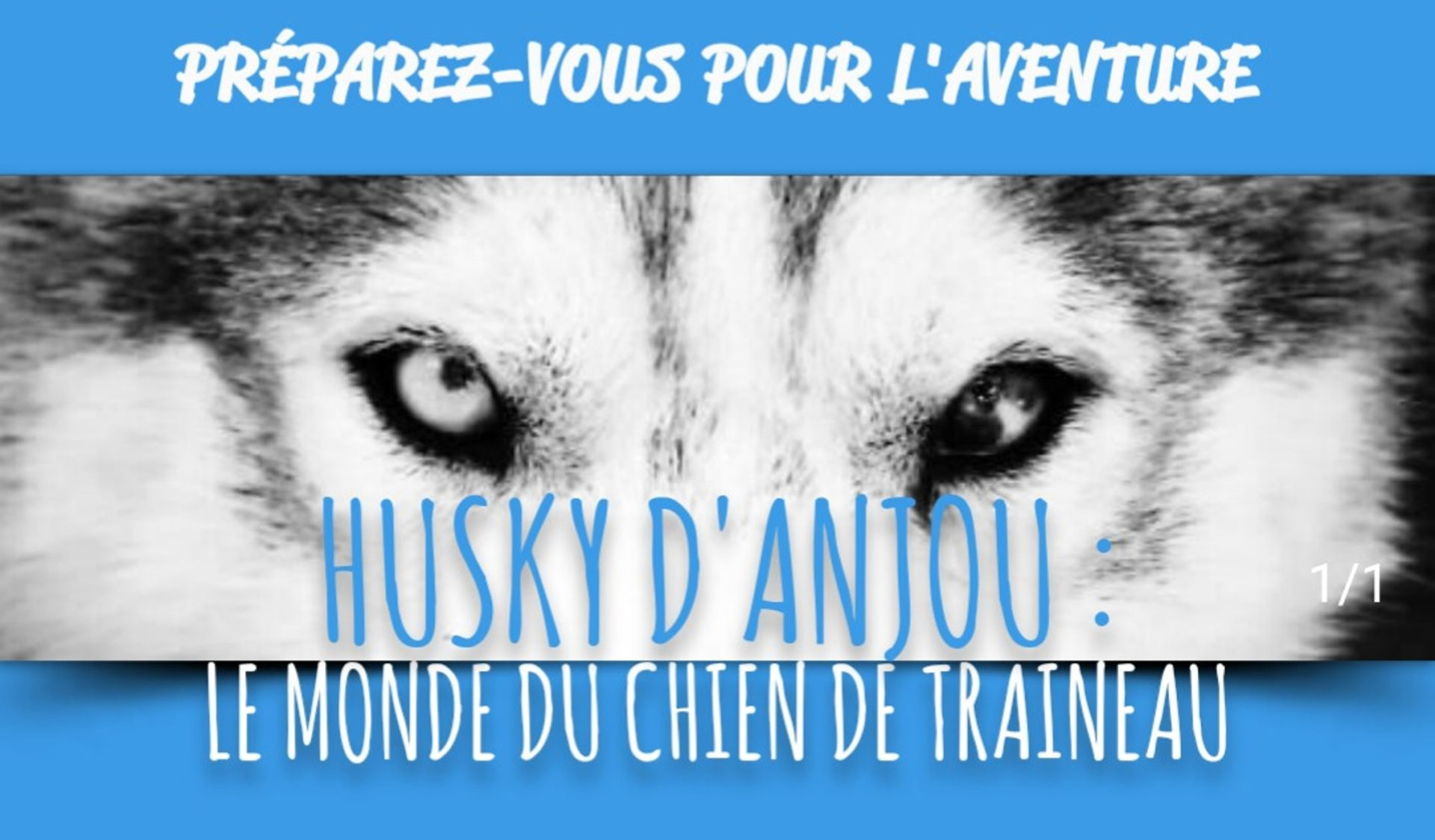 Husky D'Anjou